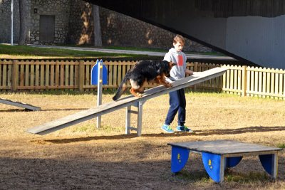 dog crossing seesaw in dog agility course