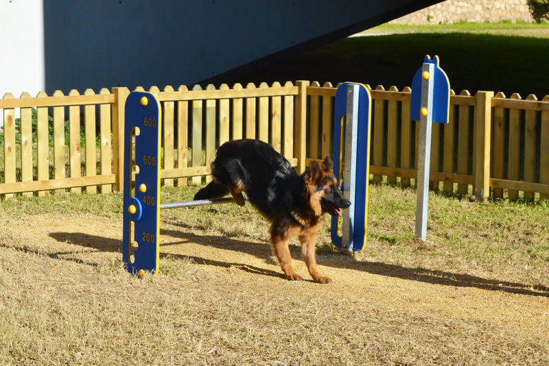 dog jumping obstacle in dog agility course