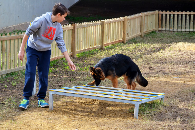 dog playing with child in dog agility course